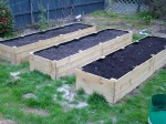 All three Raised Garden Beds filled and ready to go. Raised Bed #2 has carrot seeds sown and I saw the first poke up yesterday :D