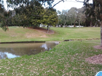 Hayman Park and the rather stagnant storm water pond doubling as a duck pond