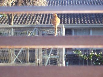 Cat just hanging around this Summer