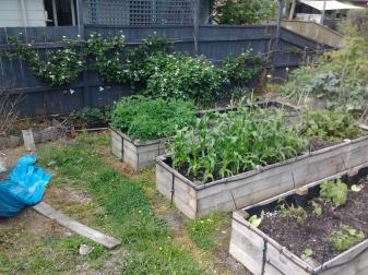 Vegetable garden getting under way into the Summer
